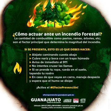 Ante un incendio de pastizal o forestal ¡Activa el Efecto Prevención!